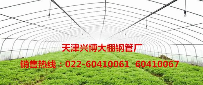 天津兴博大棚钢管厂