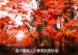 盘点魔都人少景美的赏秋地