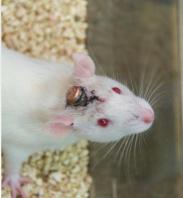 小动物脑电/心电遥测记录系统