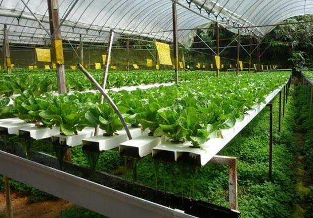世界农业产品图片素材